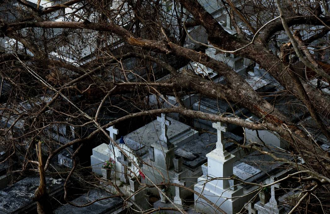 Downed trees rest on tombs at the cemetery of Lares after the passing of Hurricane Maria, in Puerto Rico, Tuesday, Sept. 26, 2017. (Ramon Espinosa/AP)