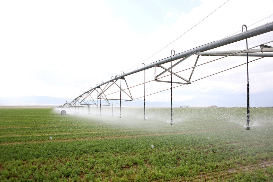 Central irrigation pivots water alfalfa on the Great Basin Ranch in Spring Valley, Monday, Aug. 7, 2017. Elizabeth Brumley Las Vegas Review-Journal