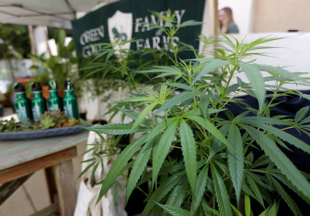 """Marijuana plants are displayed at the Green Goat Family Farms stand at """"The State of Cannabis,"""" a California industry group meeting in Long Beach, Calif., on Thursday, Sept. 28, 2017. (AP Photo/Da ..."""