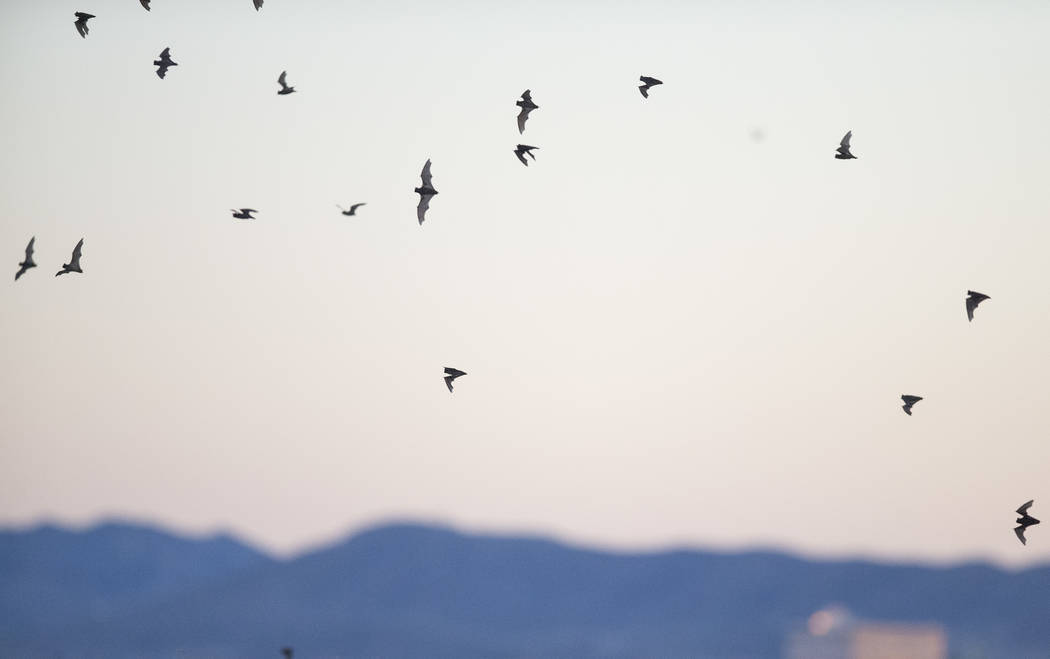 Bats fly due south after leaving their roost located in the employee parking garage at McCarran International Airport in Las Vegas, Wednesday, Sept. 27, 2017. Richard Brian Las Vegas Review-Journa ...