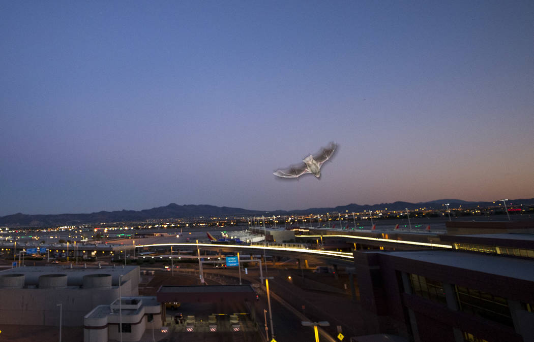 Bats depart from their roost located in the employee parking garage at McCarran International Airport in Las Vegas, Friday, Sept. 29, 2017. Richard Brian Las Vegas Review-Journal @vegasphotograph