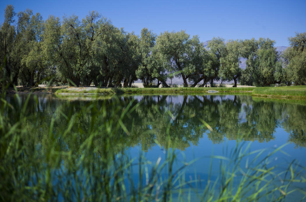 A pond at the Furnace Creek Golf Course at the Oasis at Death Valley on Thursday, Sept. 28, 2017. Originally called the Furnace Creek Ranch, the newly renamed resort area at the famed national par ...