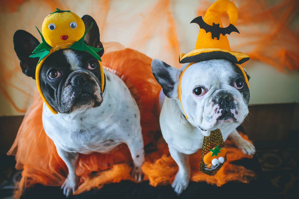 Thinkstock A pet Halloween costume contest will be part of Chapman Chrysler Jeep's Pamper Your Pet event from 10 a.m. to 2 p.m. Oct. 14. at the Valley Automall.