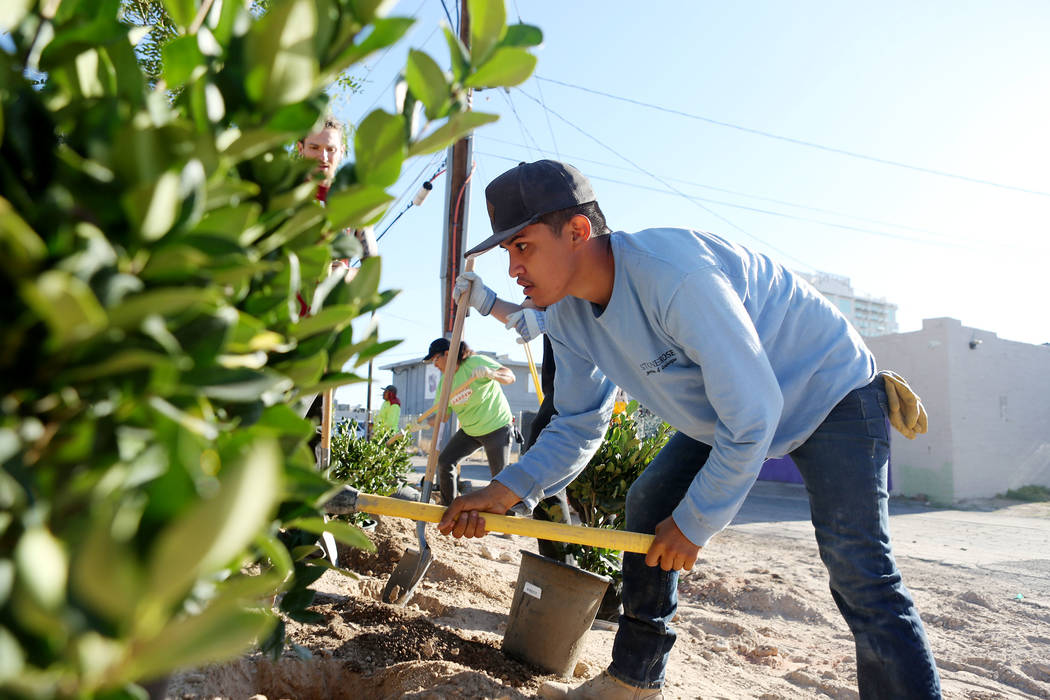 Jorge Ramirez with Stone Rose Landscape helps plant the memorial garden donated by Stone Rose Landscape on East Charleston Blvd. and South Casino Center Blvd. in Las Vegas, Thursday, Oct. 5, 2017. ...