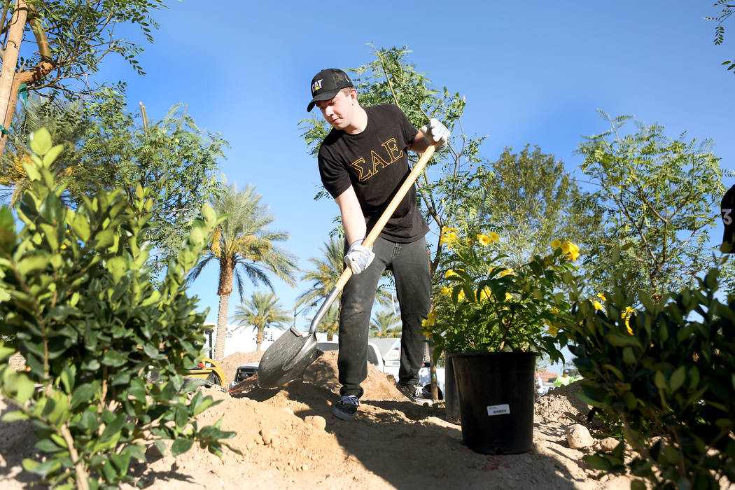 Volunteer and Las Vegas local Jonah Hamelmann, helps plant the memorial garden donated by Stone Rose Landscape on East Charleston Blvd. and South Casino Center Blvd. in Las Vegas, Thursday, Oct. 5 ...