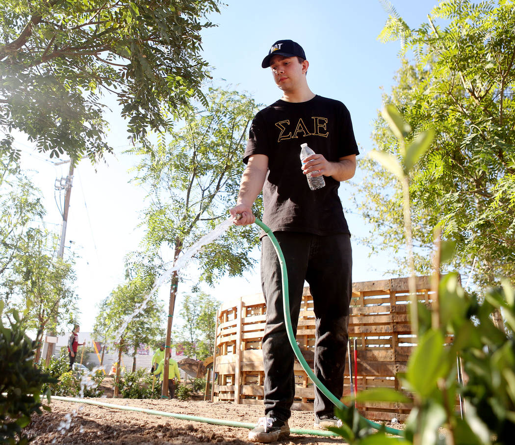 Volunteer and Las Vegas local Jonah Hamelmann, waters freshly planted trees at the memorial garden donated by Stone Rose Landscape on East Charleston Blvd. and South Casino Center Blvd. in Las Veg ...