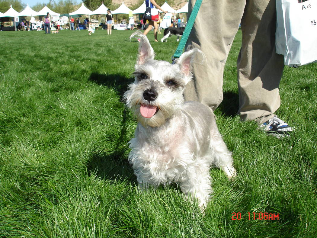 Mountain's Edge  Well-behaved, leashed pets are welcome at the Family, Fur & Fun Festival on Oct. 14 at Mountain's Edge.