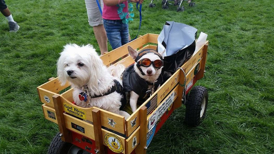 Mountain's Edge  Well-behaved leashed pets are welcome at the free Family, Fur & Fun Festival at Mountain's Edge on Oct. 14.
