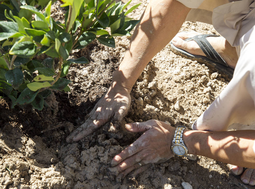Buddhist monk student Khoa Nguyen packs down soil as he volunteers at an under-construction community healing garden located at South Casino Center and East Charleston boulevards in downtown Las V ...