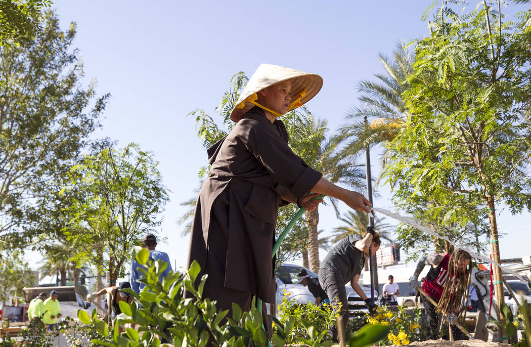 Buddist nun Hang Vo waters plants as she volunteers at an under-construction community healing garden located at South Casino Center and East Charleston boulevards in downtown Las Vegas, Thursday, ...