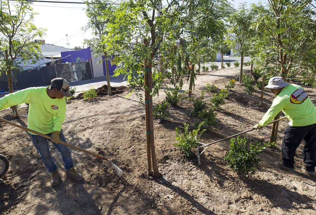 Landscapers level out dirt while working at an under-construction community healing garden located at South Casino Center and East Charleston boulevards in downtown Las Vegas, Thursday, Oct. 5, 20 ...