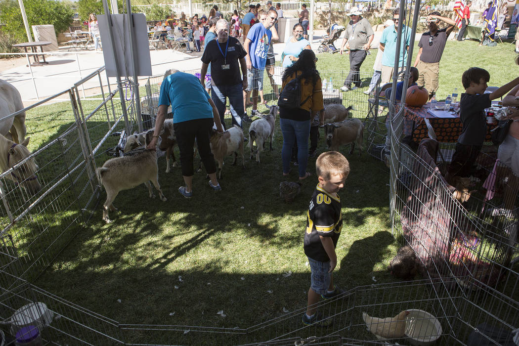 Children pet goats and chickens at Heritage Harvest Festival  in Henderson, Saturday, Oct. 7, 2017.  Bridget Bennett Las Vegas Review-Journal @Bridgetkbennett
