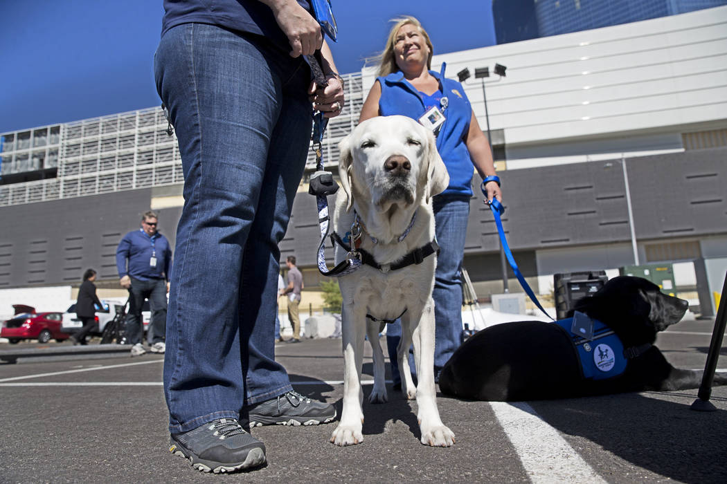 Certified facility dogs with their handlers attend a press conference addressing personal property and mental health care issues surrounding the Route 91 Festival mass shooting, at the old Riviera ...