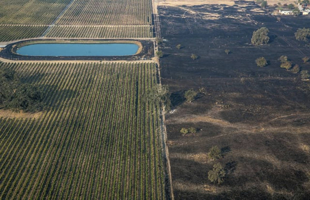 In this Wednesday, Oct. 11, 2017, aerial photo provided by George Rose shows a lush vineyard, left, next to a scorched wasteland near Vintners Inn, just north of Coffey Park, Sonoma County near Sa ...