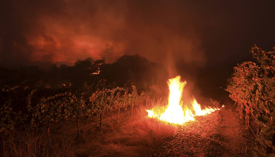 Brush in a vineyard burns as it singes grapevines at the head of a wildfire in Geyserville, Calif., Thursday Oct. 12, 2017. Since igniting Sunday in spots across eight counties, the fires have tra ...