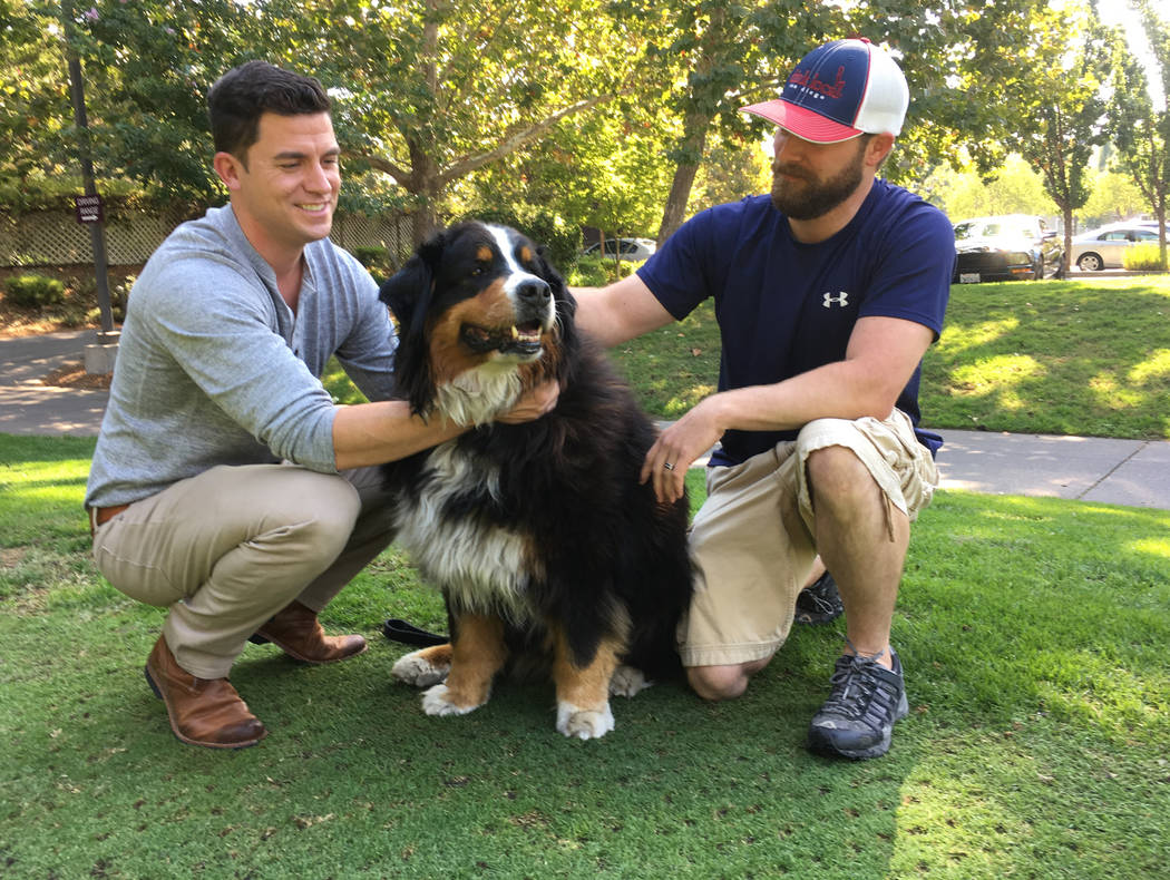 Jack Weaver, left, and his brother in law, Patrick Widen, pose with Izzy, a 9-year-old Bernese Mountain Dog, who belongs to Weaver's parents, Saturday, Oct. 14, 2017, in Windsor, Calif. (AP Photo/ ...