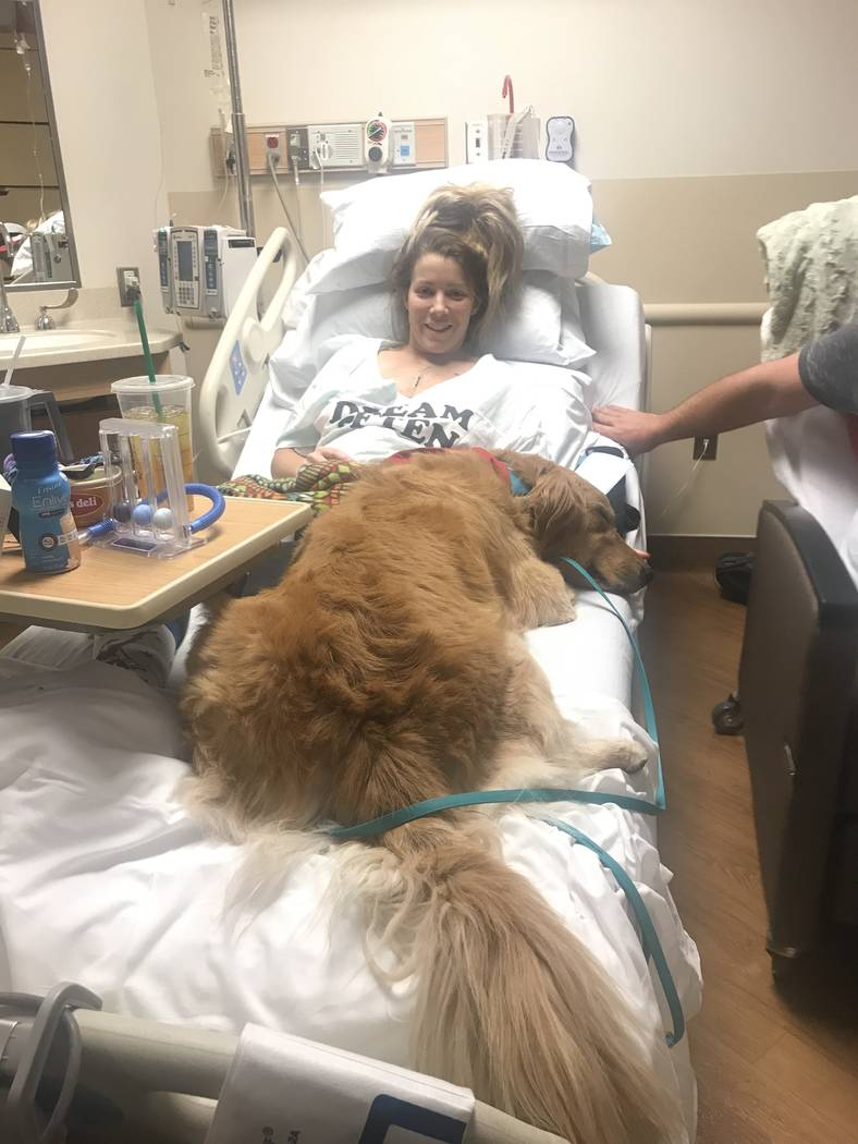Golden retriever Carson gives shooting victim Rachel Sheppard some love in her room at Sunrise Hospital. (Jodi Notch)
