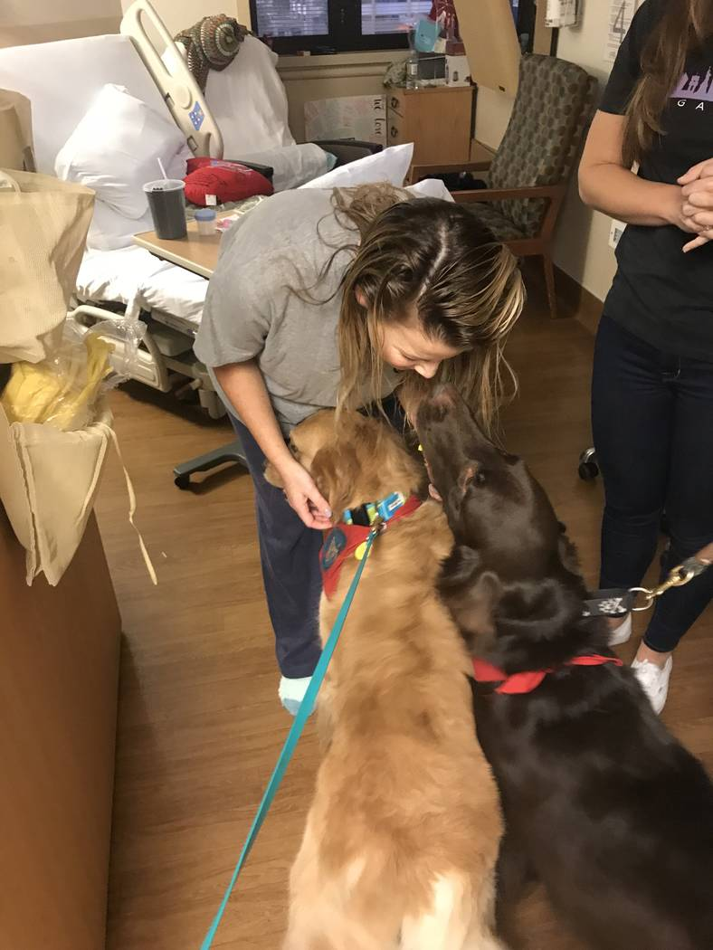 Shooting victim Rachel Sheppard gets some love in her room at Sunrise Hospital from Carson, left, and Toby, right. The two therapy dogs are licensed through Therapy Dogs, International, a voluntee ...