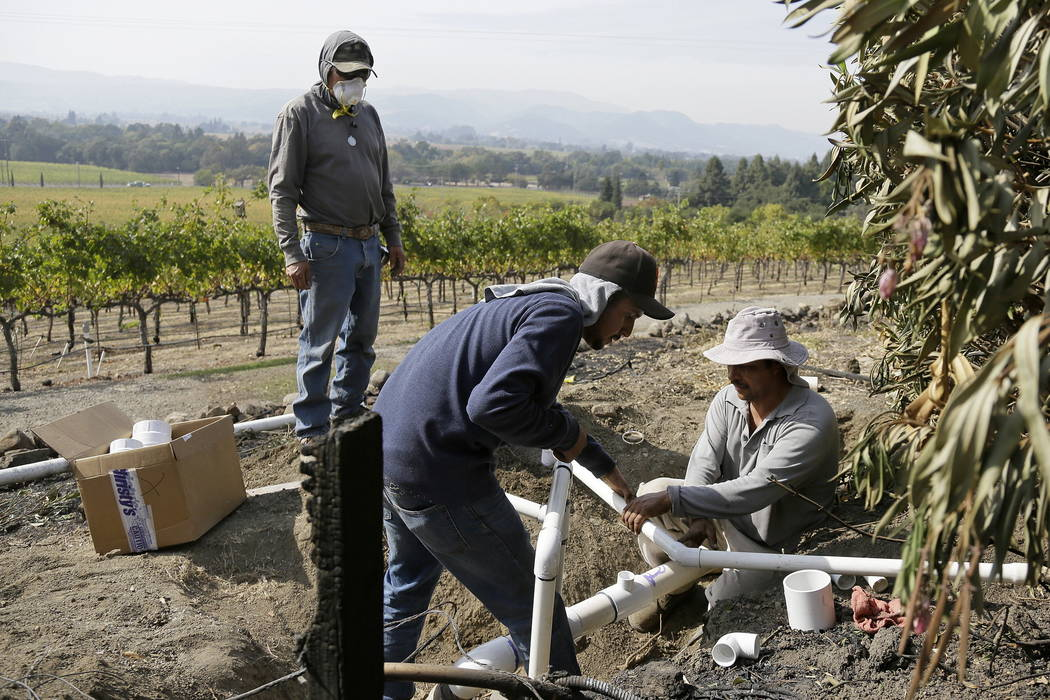 Workers at the Signorello Estate winery install new irrigation pipes to replace ones burned by wildfire Monday, Oct. 16, 2017, in Napa, Calif. State and local officials say they are trying to get  ...
