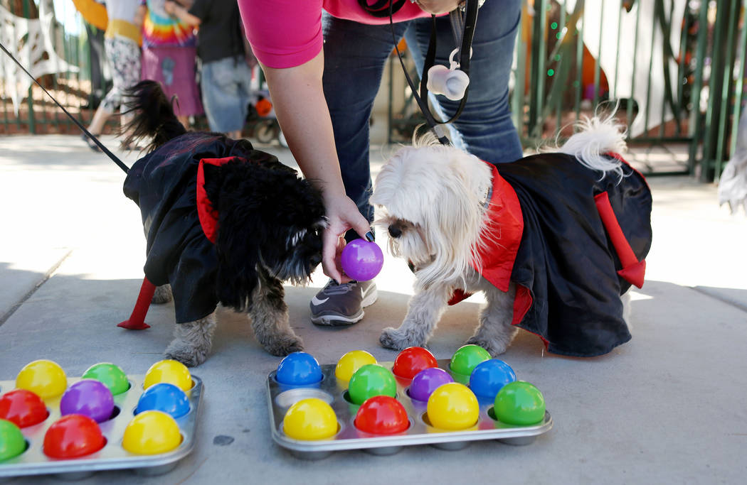 Jasmine Ashworth plays with her dogs Oreo, left, and Cisco during Opportunity Village's Pumpkin Paws at HallOVeen at the Magical Forest in Las Vegas, Sunday, Oct. 22, 2017. Elizabeth Brumley Las V ...