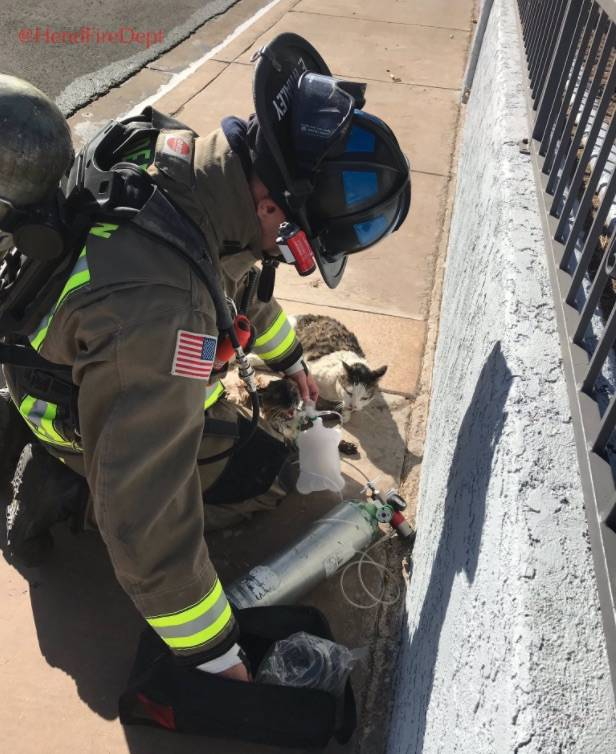 Henderson Fire Department rescued and resuscitated two cats from the house fire on Box Elder Way. (HendFireDept/Twitter)