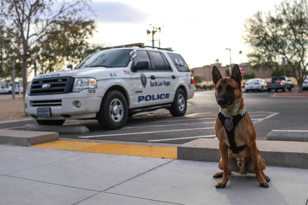 North Las Vegas Police K-9 officer Storm outside city hall in North Las Vegas, Monday, Oct. 30, 2017. Joel Angel Juarez Las Vegas Review-Journal @jajuarezphoto