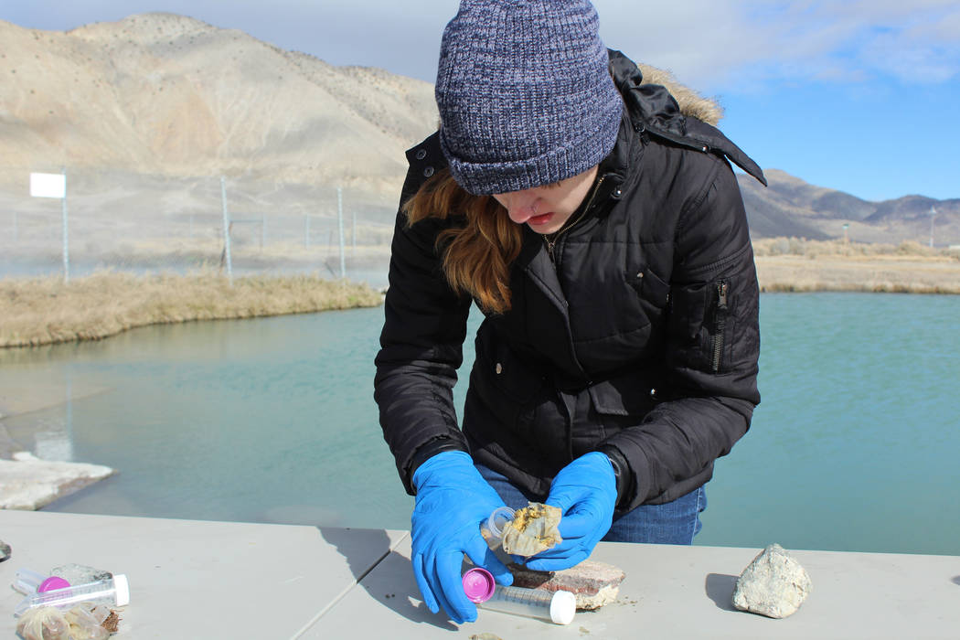 "UNLV undergraduate Lara Turello processes a sample from one of the ""teabags"" placed in Great Boiling Spring to try to stimulate growth of microorganisms. (UNLV)"