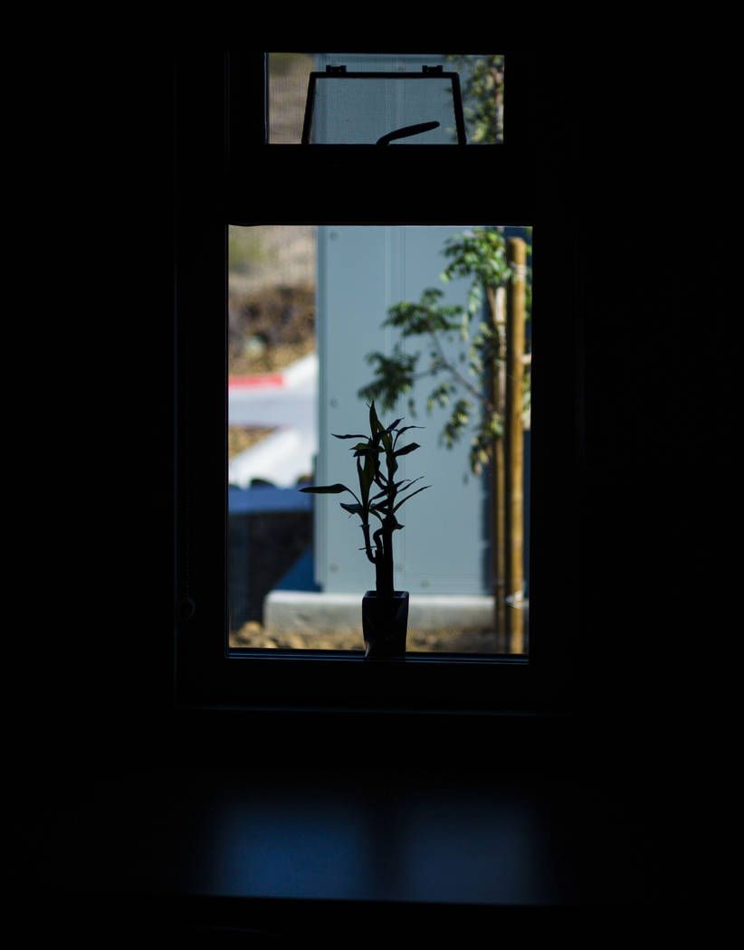 A decorative plant in a dorm during a tour of Fire Station 91 in Henderson on Friday, Nov. 10, 2017. The new facility is the 10th fire station in Henderson, serving the Inspirada and Medeira Canyo ...