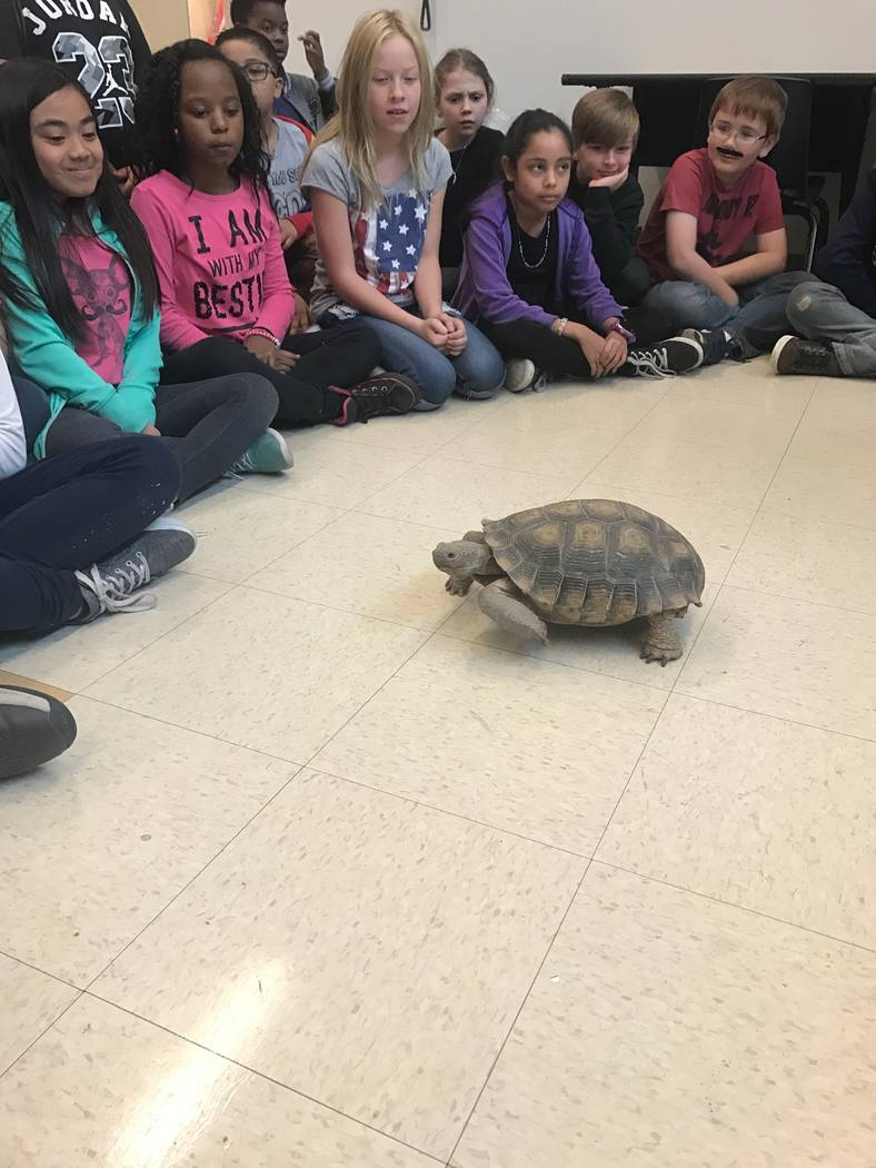 Students observe Gehring Elementary's school turtle. School principal Amy Yacobovsky said the school is planning on adding additional wildlife features to the school, like a butterfky habitat. (Kr ...