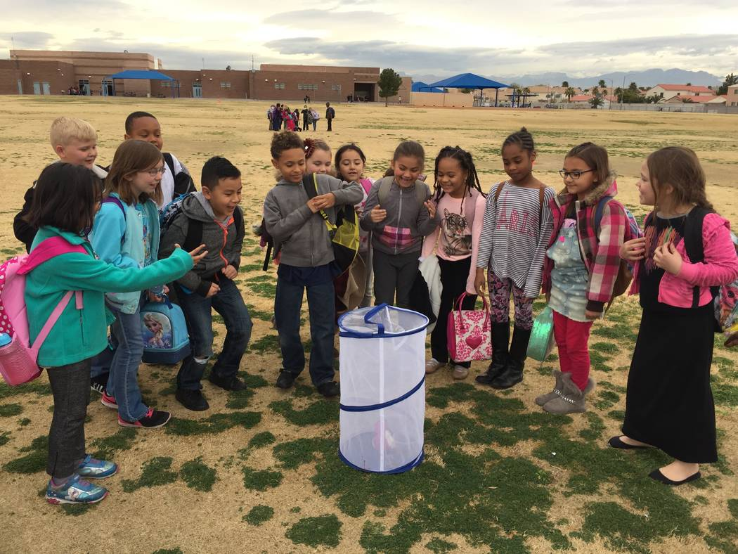 Gehring Elementary School students observe a netted terrarium. Yacubovsky  says the school is expanding its