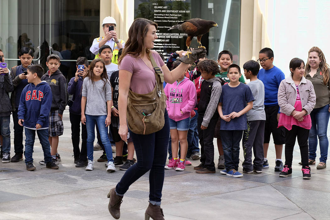 Falconer Alyssa Bordonaro walks with her Harris's Hawk named Dany as schoolchildren ask questions at the Museum of Modern Art in Los Angeles in April. (AP Photo/Richard Vogel)