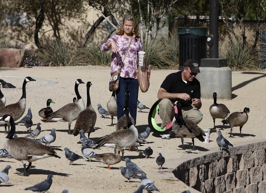 Derrick Sloop and his daughter Corinn feed birds during International Migratory Bird Day on Tuesday, Nov. 21, 2017 at Sunset Park Lake in Las Vegas. Bizuayehu Tesfaye Las Vegas Review-Journal @biz ...