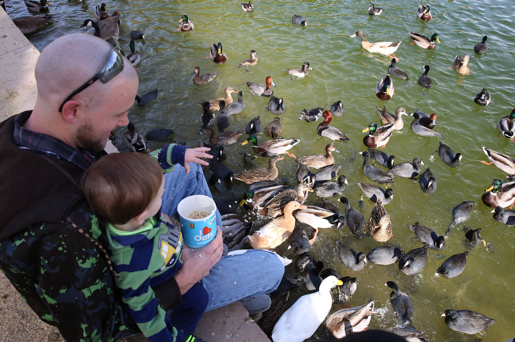 Paul Gustafson Jr. and his son Paul III feed birds during International Migratory Bird Day on Tuesday, Nov. 21, 2017 at Sunset Park Lake in Las Vegas. Bizuayehu Tesfaye Las Vegas Review-Journal @b ...