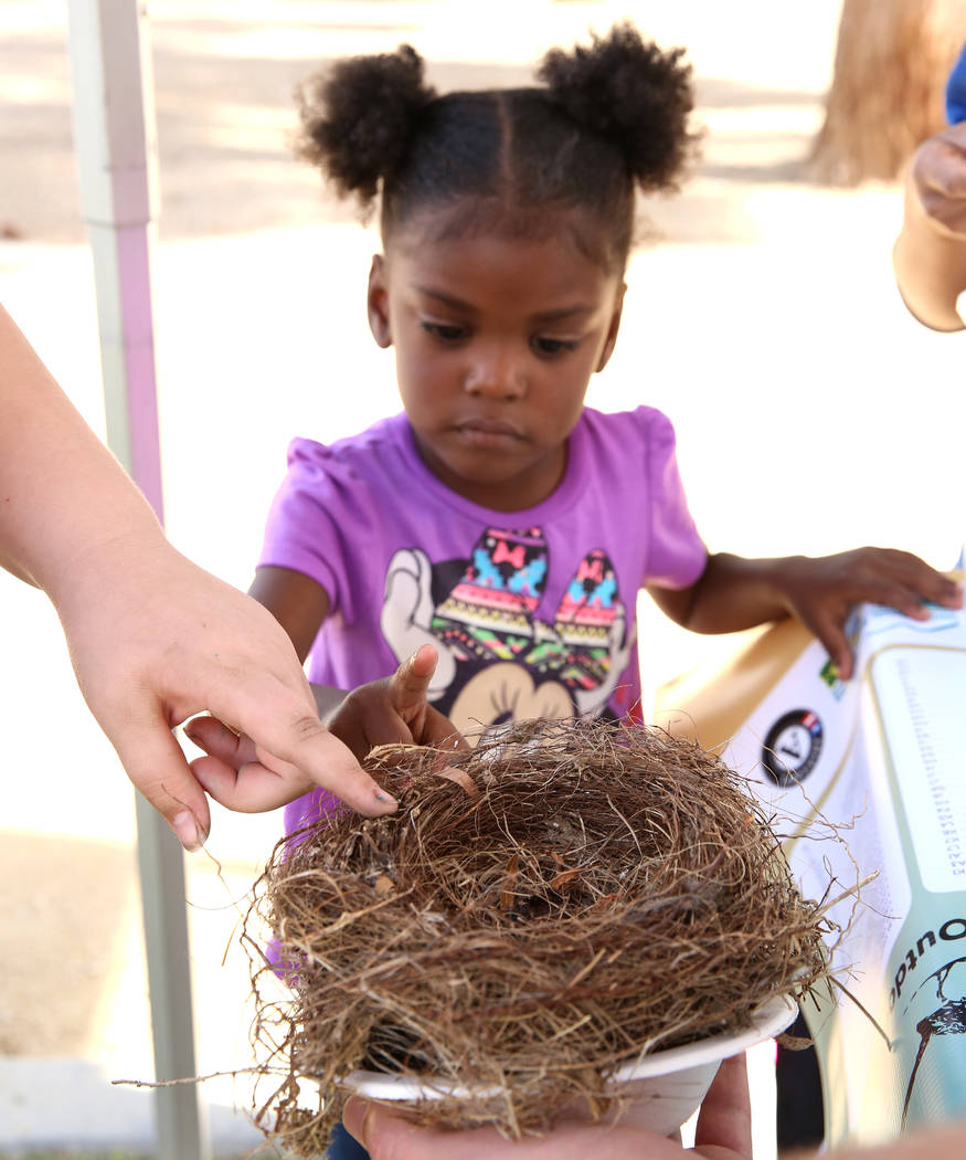 Nyriah, 3, who declined to give her last name, touches a bird nest during International Migratory Bird Day on Tuesday, Nov. 21, 2017 at Sunset Park Lake in Las Vegas. Bizuayehu Tesfaye Las Vegas R ...