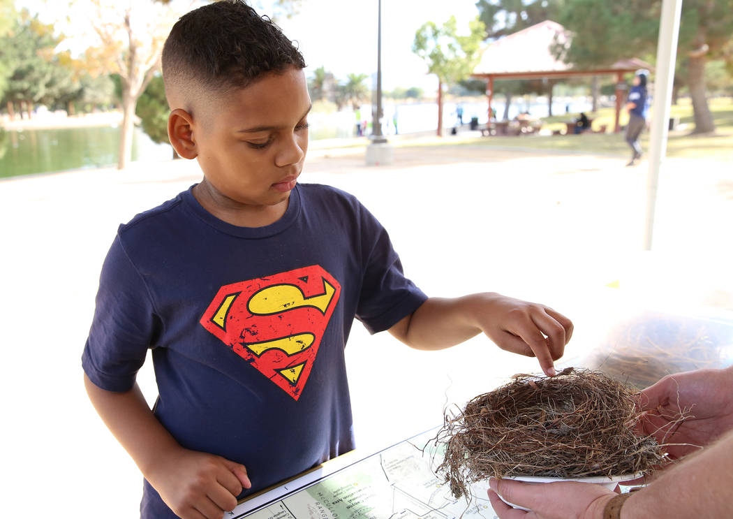 Jason, 10, who declined to give his last name, touches a bird nest during International Migratory Bird Day on Tuesday, Nov. 21, 2017 at Sunset Park Lake in Las Vegas. Bizuayehu Tesfaye Las Vegas R ...