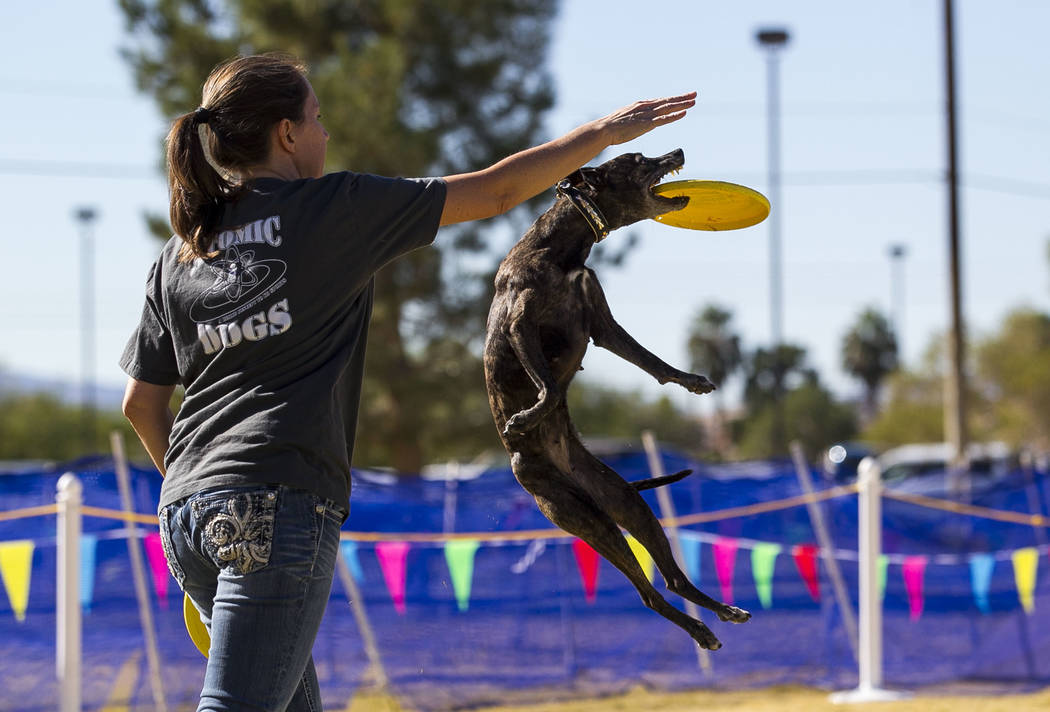 Jeni Rivett and Kraken, a whippet mix dog, perform a frisbee routine during the Animal Foundationճ 5th Annual Fast and Furriest 5K event at Sunset Park in Las Vegas, Saturday, Nov. 18, 2017. ...