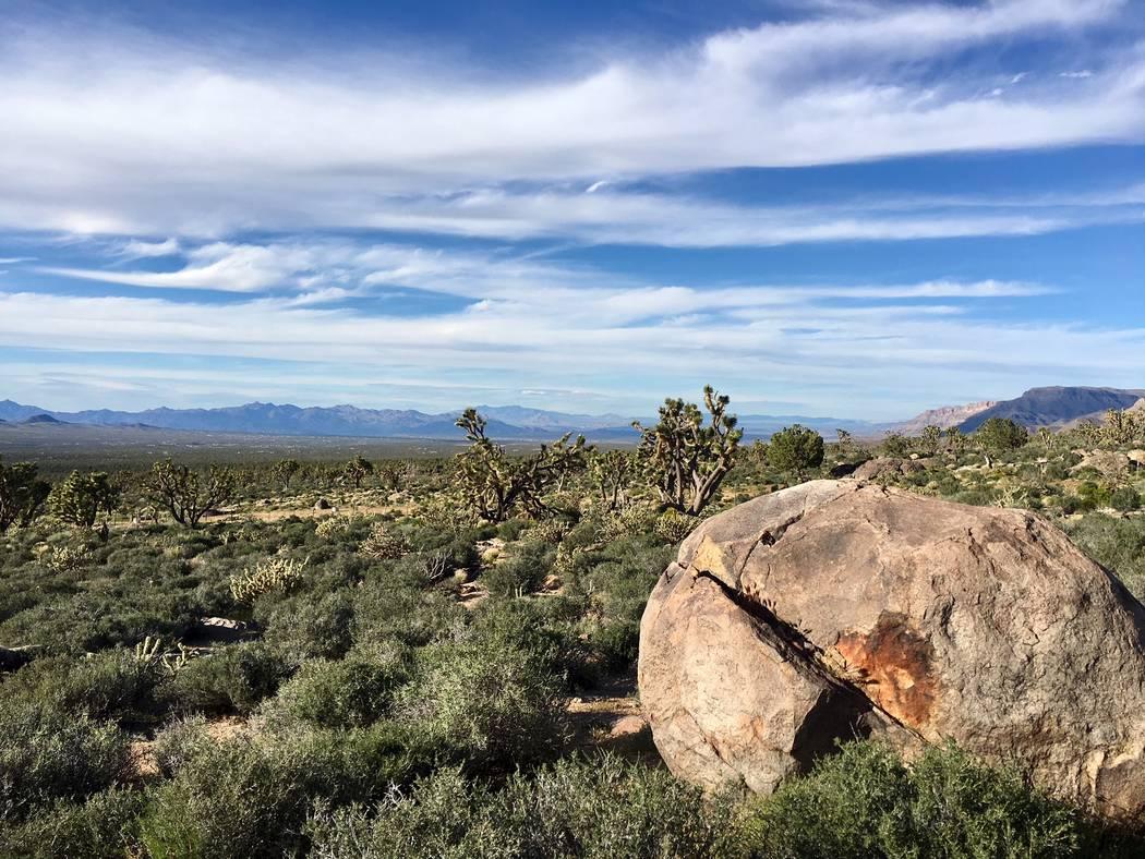 Grapevine Mesa Joshua Tree Forest, about 100 miles southeast of Las Vegas (Friends of Arizona Joshua Tree Forest)