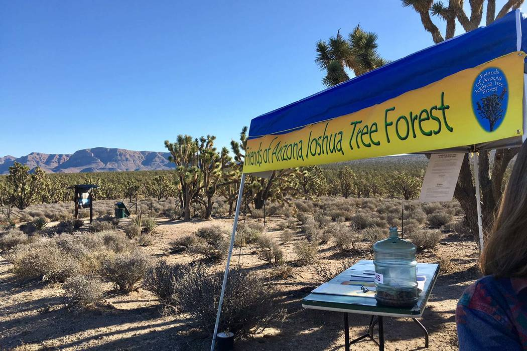 A kiosk and table greet visitors to the Grapevine Mesa Joshua Tree Forest in Arizona, about 100 miles southeast of Las Vegas. (Friends of Arizona Joshua Tree Forest)