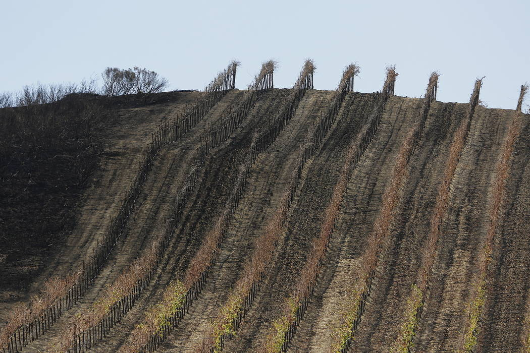 A partially burned vineyard is seen along Highway 121 in Sonoma, Calif., last month.  (AP Photo/Eric Risberg)