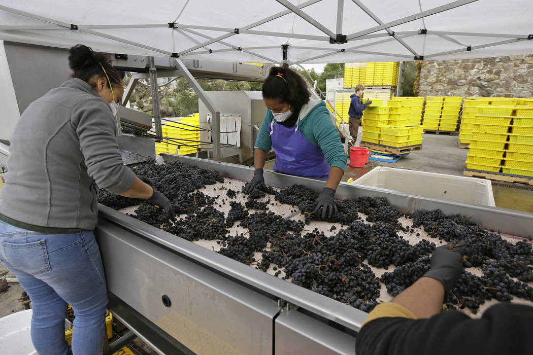 Women sort Cabernet Sauvignon grapes from Howell Mountain at the Cardinale winery in Oakville, Calif., last month.  (AP Photo/Eric Risberg)