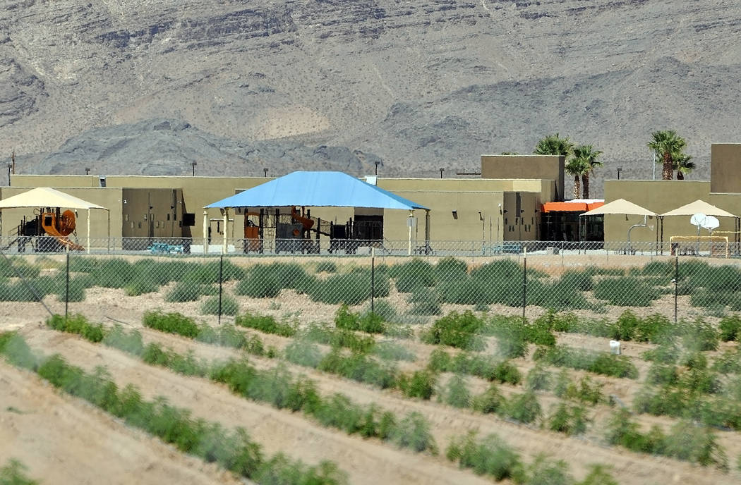 A hemp farm owned by Dan Harris is right next to Manse Elementary School. Horace Langford Jr./Pahrump Valley Times