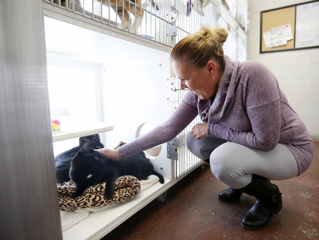 Manager of Noah's Animal House Gennifer Davenport visits with cat siblings that stay at Noah's Animal House in North Las Vegas on Tuesday, Nov. 21, 2017. Noah's Animal House is the pet shelter tha ...