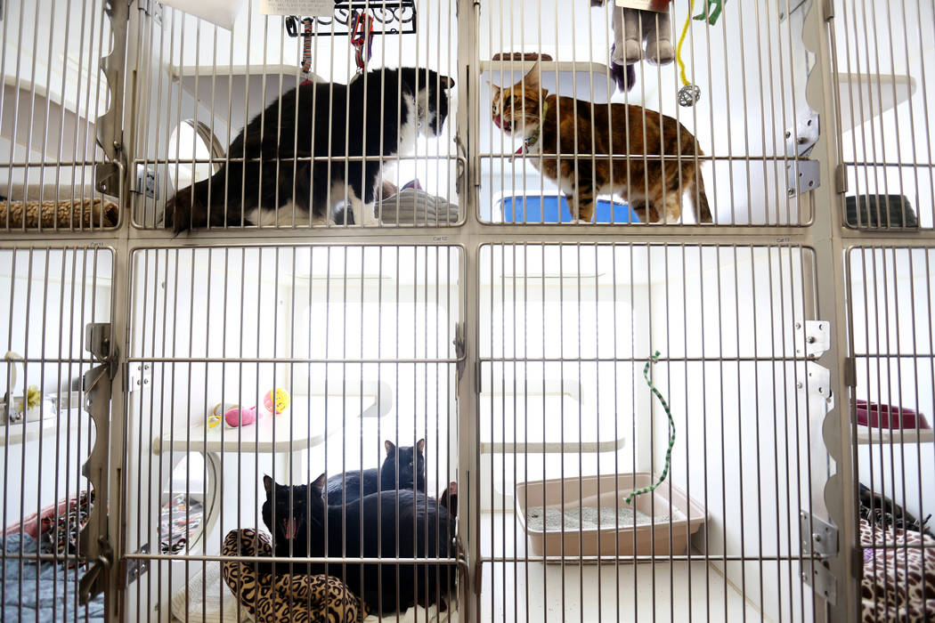 Cats staying at Noah's Animal House in North Las Vegas on Tuesday, Nov. 21, 2017. Noah's Animal House is the pet shelter that partners with The Shade Tree shelter for victims of domestic violence, ...