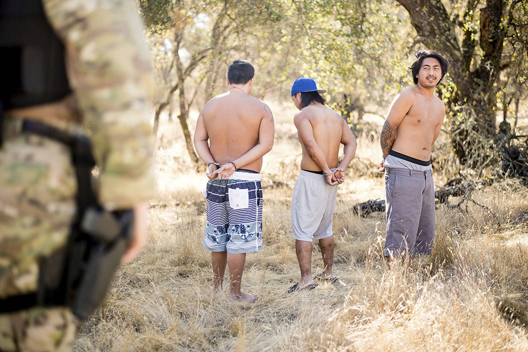 A sheriff's deputy guards three men arrested for allegedly cultivating marijuana in unincorporated Calaveras County, Calif. (AP Photo/Noah Berger)
