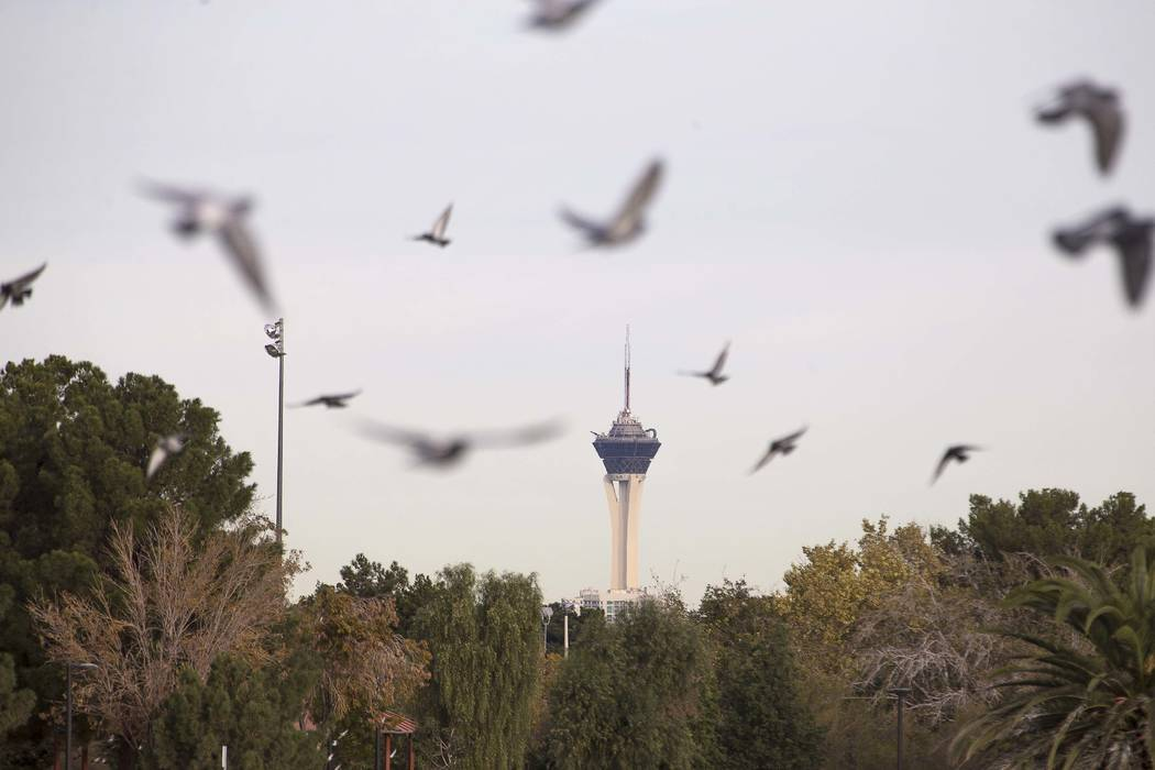 Birds circle the lake at Sunset Park as the Stratosphere tower is seen in the background on Wednesday, Nov. 29, 2017.  (Richard Brian/Las Vegas Review-Journal) @vegasphotograph