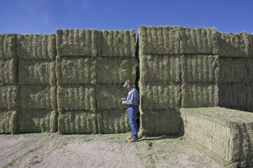 Esmeralda County Commissioner Ralph Keyes stands near stacks of alfalfa on Tuesday, June 6, 2017, in Dyer in Esmeralda county. The county is one of the least populous in the nation. Rachel Aston L ...