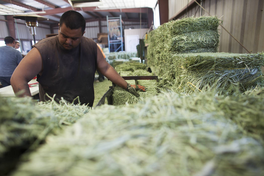 Darren Chapa cuts the alfalfa to package on Tuesday, June 6, 2017, in Dyer in Esmeralda county. The county is one of the least populous in the nation. Most of the residents rely on agricultural wo ...