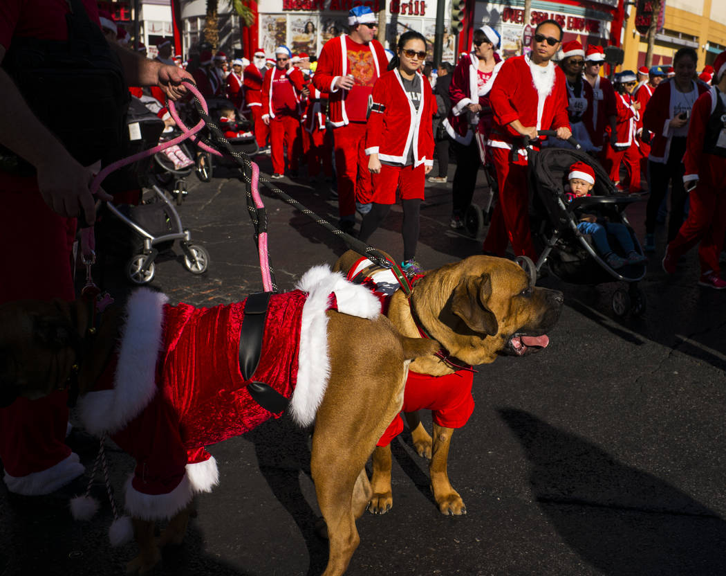 Race participants, including a pair of dogs, make their way towards the starting line for the Las Vegas Great Santa Run in downtown Las Vegas on Saturday, Dec. 2, 2017. Chase Stevens Las Vegas Rev ...