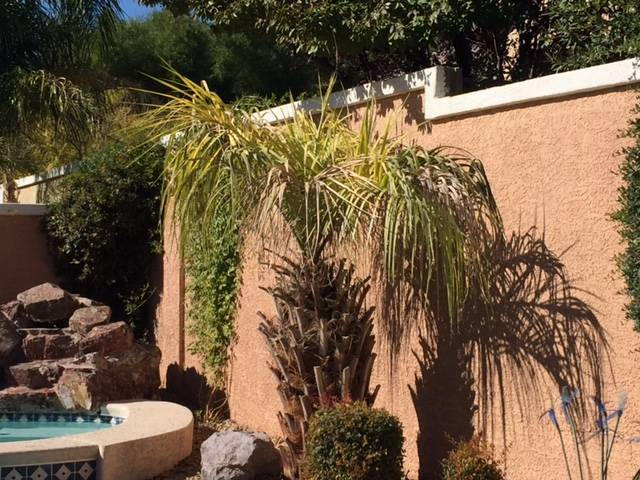 Bob Morris A young pindo palm should get 10 to 15 gallons each time it's watered. This time of year, watering once a week should be enough.