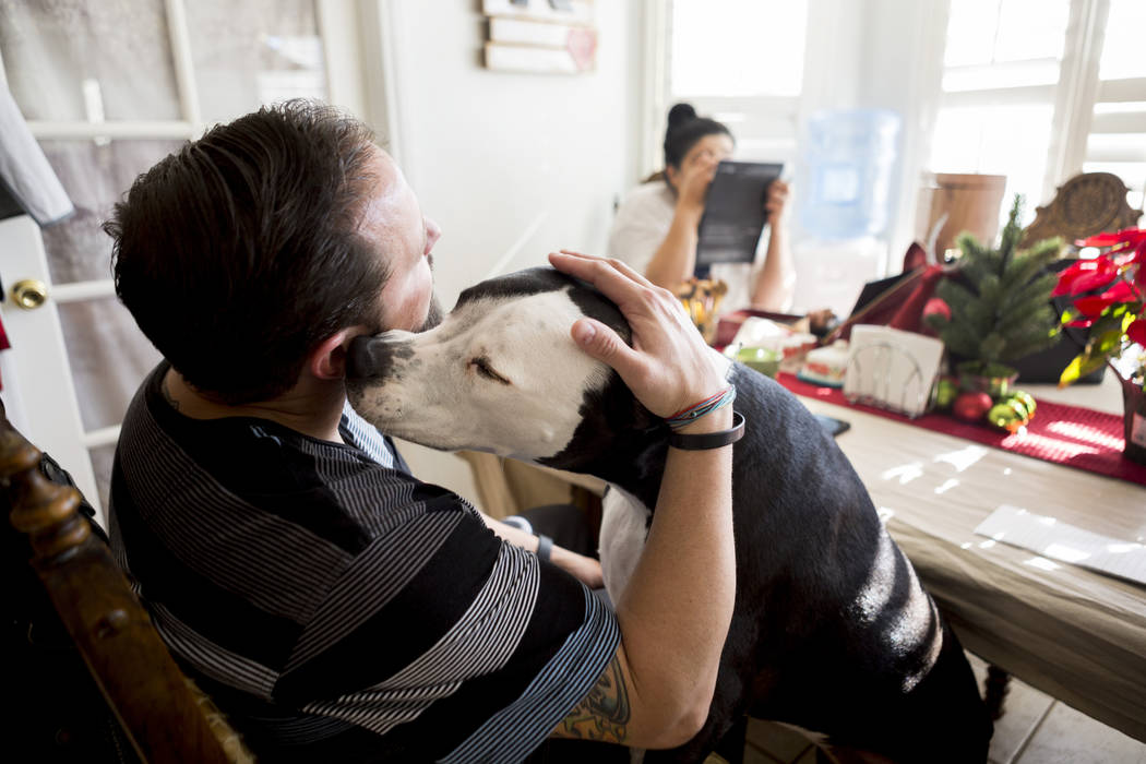 William King pets Daisy in their home in Las Vegas, Wednesday, Dec. 13, 2017. Elizabeth Brumley Las Vegas Review-Journal  @EliPagePhoto